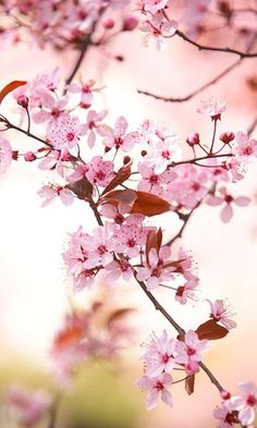 Is your Signature fragrance Japanese Cherry Blossom?
