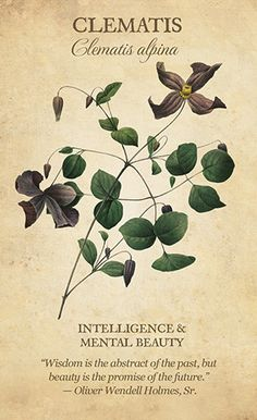 botanical inspirations by lynn araujo Illustration Blume, Botanical Illustration, Botanical Flowers, Botanical Prints, Flower Meanings, Flower Names, Language Of Flowers, Nature Journal, Botanical Drawings