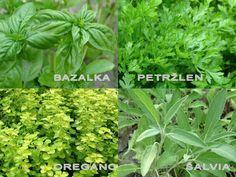 recepty.netCabinet:Bylinky-pestovanie v záhrade,na balkóne,v kvetináči,použitie v kuchyni,v zdravotníctve.Herbs-growing in the garden on the balcony,in pots,use in the kitchen,health.
