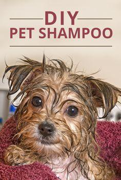 DIY Pet Shampoo