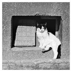 Film, Lazy, Photography, Animals, Movie, Photograph, Animales, Film Stock, Animaux