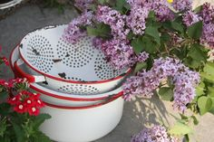 red & white enamelware, been buying these & storing @ the farmhouse.