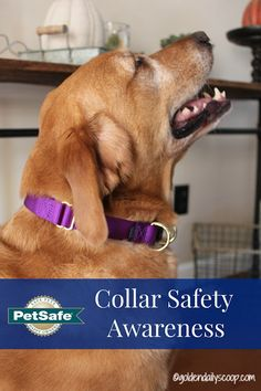 Dog Collar Safety Aw