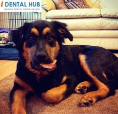 Dental Humor - dogs love retainers AND dentures! Dental Facts, Dental Humor, Lab Humor, Orthodontic Appliances, Family Dentistry, Cosmetic Dentistry, Teeth Cleaning, Just Smile, Orthodontics
