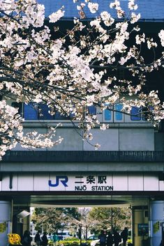 Spring at Nijō Station, Kyoto
