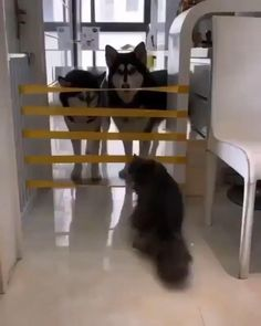 Things that make you go AWW! Like puppies, bunnies, babies, and so on. Funny Animal Videos, Cute Funny Animals, Funny Animal Pictures, Cute Baby Animals, Funny Dogs, Animals And Pets, Cute Cats, Nature Animals, Tier Fotos