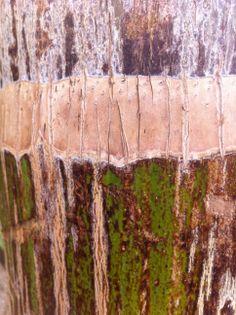 tree bark (Photo by Hava Kaplan)