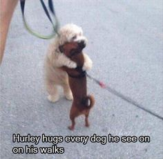 Funny Animal Pictures Of The Day 27 Pics