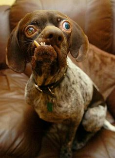 Ugly dog....but all of God's creatures are beautiful. :-)
