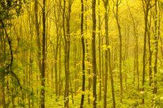 Wald und Wetter 07 – Bäume, Ebenen, Tiefe, Nebel. Die kurze Schärfe der Bilder zeigt auf einzelne Exemplare mit dem Finger. So sieht man Bäume vor lauter Wald. 2014, MD   © www.piqt.de   #PIQT