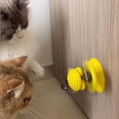 Anxiety Cat, Cat Activity, Fingers Design, Cute Cat Gif, Kittens Playing, Ball Lights, Cat Supplies, Cat Furniture, Cat Design