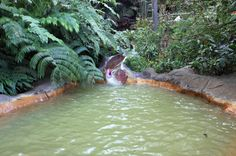 the springs waterslide at perdido hotsprings    - Costa Rica
