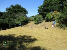 A gardener is possibly the homeowner's best bet to maintaining beautiful beds year round. Santa Barbara Ca, Beautiful Beds, Gardening Services, Lawn And Garden, Southern California, Evolution, Dolores Park, Landscape, Travel