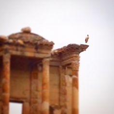 Today a stork was spotted on Celsus Library in Ephesus Ancient City. Storks come to Selcuk region every spring to leave their eggs and breed their younglings. These majestic animals are in Ephesus all summer long and they wait for bird lovers. Visit, enjoy and remember Ephesus with us! www.bestephesustour.com #ephesus #excavation #ruins #royalcarribean #tour #travel #turkish #turkey #izmir #istanbul #privatetour #azamara #archaelogy #seabourne #shopping #history #holiday #hollandamerica…