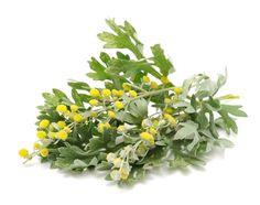О ЧЁМ УМАЛЧИВАЮТ ВРАЧИ: ПОЛЬЗА ПОЛЫНИ.. Это очень ценное лекарственное растение…