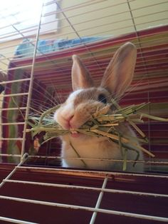 Awww! They love their hay!