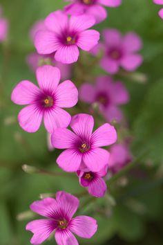 ~~Little flowers by Fumie Lorenzo~~