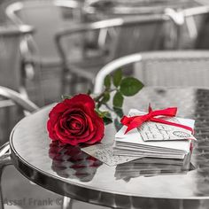 red rose Celebrating - Love - Red - Valentines