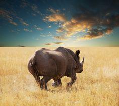 Rhino in Etosha park #Namibia