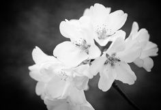 Black and white photography #flower #floral #black #white #blossom