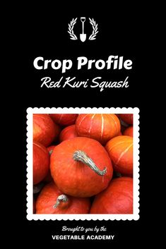 Take your vegetable game to the next level with professional advice and the support of a like minded community. Red Kuri Squash, Online Classroom, Seed Catalogs, Grow Your Own Food, The Hard Way, Fresh Vegetables, Gardening Tips, Finding Yourself, Pie