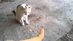 """Me feeding the stray cat """"Minki""""."""