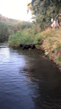 Pitbull Bull Terrier, Corso Dog, Cane Corso, Big Dogs, Cute Cats, Dog Breeds, Pitbulls, Cute Animals, Puppies