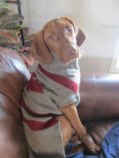 Ravelry: Large dog winter coat pattern by Josée Labrie