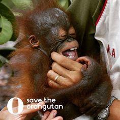 Be happy - it is almost weekend :) #orangutan #happy #love #smile #lucky #good #friday #weekend #savetheorangutan