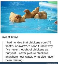 I'm going to spend the summer taking the chickens on field trips to the lake. We are going to have so much fun. I'm going to buy them old-timey swimsuits.