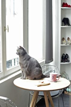 Pets in interiors - French By Design