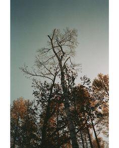 . . Once it breaks . . #filmphotography