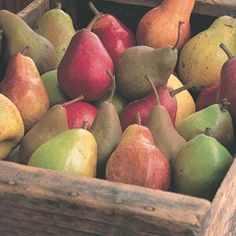Pears - along with green and red apples, and peaches are known as Tree Fruits and are common wine aromas in certain fruity white wines.
