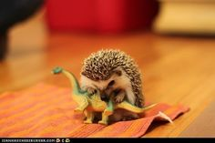 hedgehogs were the reason dinosaurs went extinct. :)