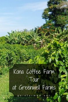 Must do this on our Big Island Hawaii trip - Kona coffee farm tour!