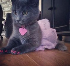 If we have only sons, I say we get a few cats and dress them up like this...