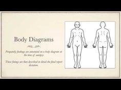 Body Diagram, Writing, Memes, Reading, Meme, Being A Writer
