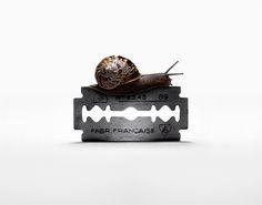 Snail on sharp edge