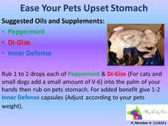 Easing Upset tummies of your pets with Young Living Essential Oils TO ORDER: www.heavenscentoils4u.com YL# 1434972 Debbie Norris