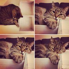 1, 2, 3 nap! Cat in a box