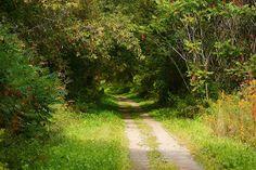 Trail near my house.