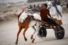 Image result for donkey race Donkey, Racing, Horses, Animals, Image, News, Running, Animales, Animaux