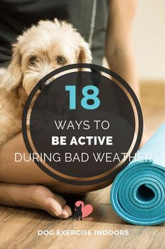 Dog Exercise Indoors - How to Be Active During Bad Weather #dogexercise #dogexerciseideas #activedog #dogactivities #doggames #dogplaying #dogplaygroundideas #doggamesbrain #doggamesindoor Brain Games For Dogs, Dog Games, Indoor Dog Park, Dog Playground, Dog Health Tips, Pet Health, Pet Care Tips, Pet Tips, Dog Nutrition