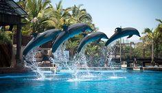 uShaka Marine World Durban South Africa, Visit South Africa, Sydney Harbour Bridge, Dolphins, Clouds, World, Places, Travel, The World