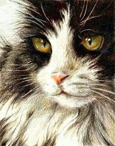 The Secrets Of Drawing Realistic Pencil Portraits - colored pencil! looks just like my Amy Herman - love this cat of ours. Secrets Of Drawing Realistic Pencil Portraits - Discover The Secrets Of Drawing Realistic Pencil Portraits Cat Drawing, Painting & Drawing, Drawing Faces, Animal Paintings, Animal Drawings, Pencil Drawings, Photo Chat, Watercolor Cat, Color Pencil Art