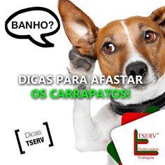 BLOG DOS INSETOS - ASSOCIAÇÃO BRASILEIRA DE FRANCHISING: CARRAPATO NO SEU ANIMAL, O QUE FAZER?
