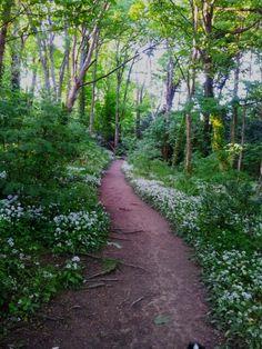 St Helens Woods in Hastings, East Sussex. Hastings East Sussex, Lasy, Kingdom Of Great Britain, Walk In The Woods, Great British, Beautiful Scenery, United Kingdom, Summertime, Coastal