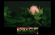 Color Charts Inspired by Natural Landscapes – Fubiz Media
