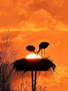 Sunrise and Sunset Beautiful Sunrise, Beautiful Birds, Beautiful World, Animals Beautiful, Amazing Photography, Nature Photography, Reflection Photography, Photography Tips, Portrait Photography