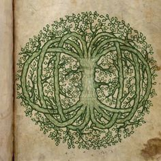 If #DLMOOC metaphor is #tree & #rhizo14 is #rhizome…what happens if you combine them? #CelticTree  via @vcvaile